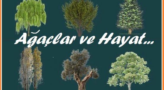 Ağaçlar gibi ol