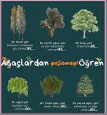Hangi ağaç ne anlatıyor , kişisel gelişim