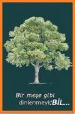 Meşe Ağacı Nasıl Yaşıyor