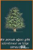 Porsuk Ağacı Nasıl Yaşıyor