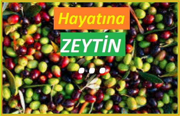 Zeytin ve Faydaları